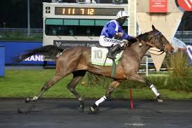GIN COCKTAIL - La fiche CANALTURF du cheval, performances pmu, pédigré,  évolution de la cote en direct, résultats rapports, courses 2021
